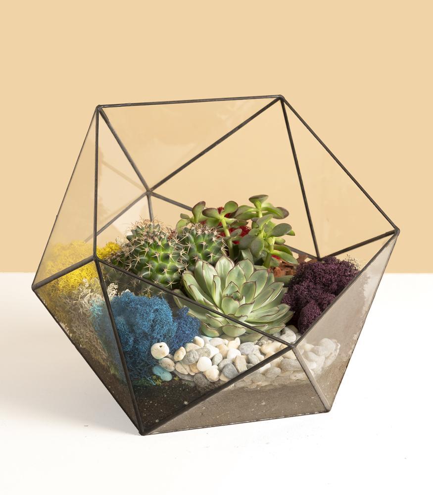 Купить флорариум из кактусов и суккулент недорого