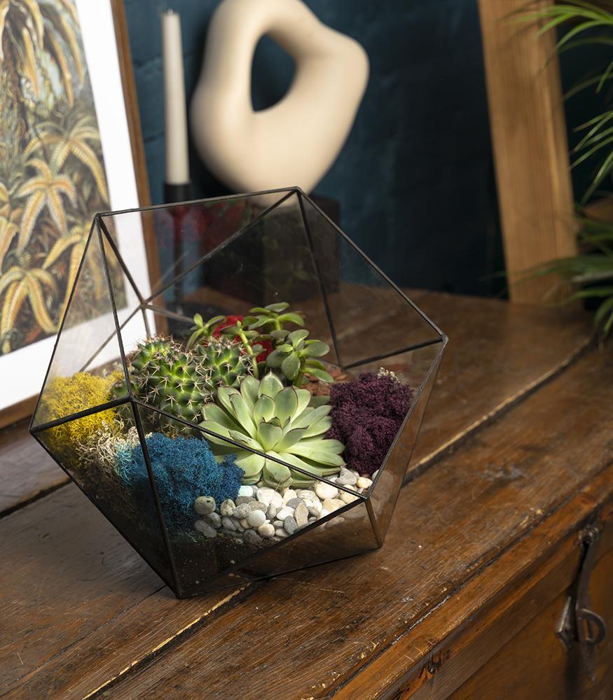 Купить флорариум с кактусами недорого с доставкой