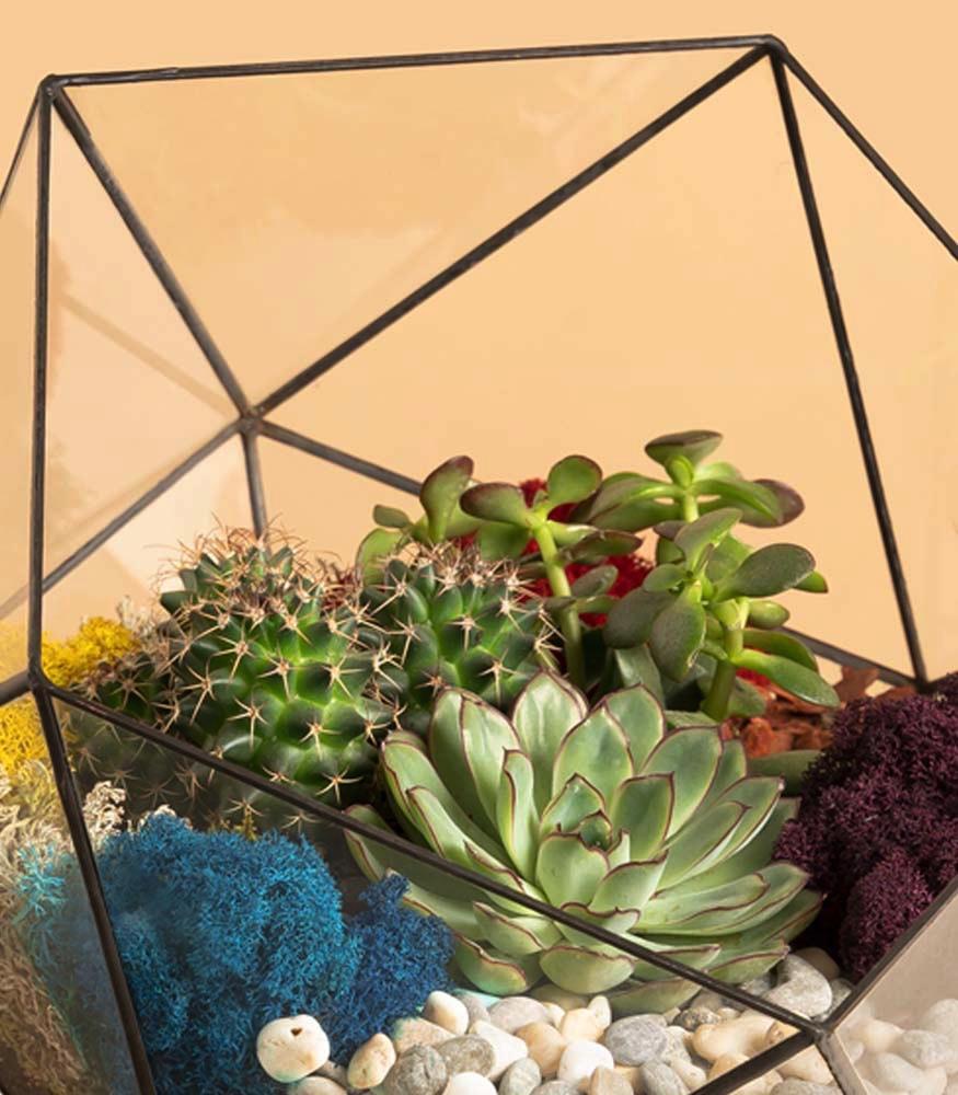 Купить суккуленты и кактусы в флорариуме