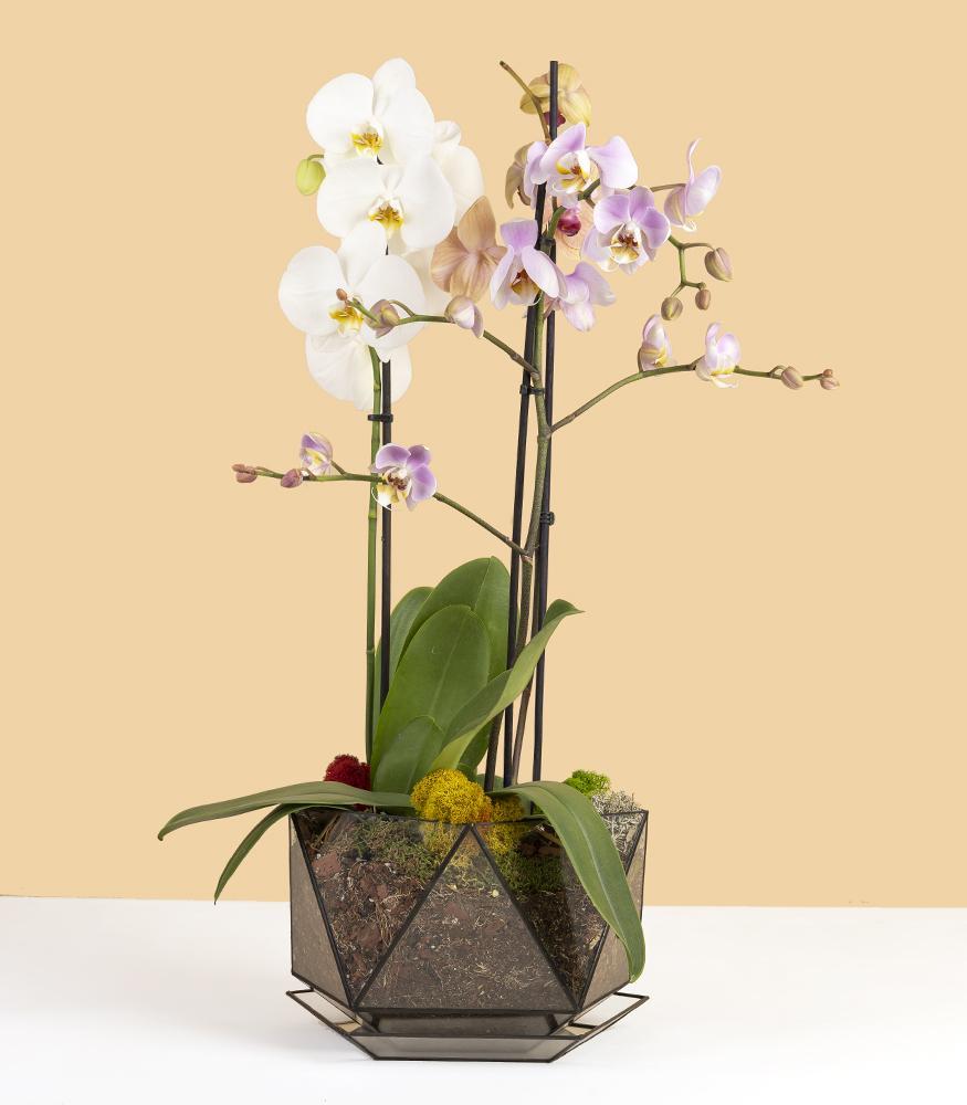 Купить кашпо с орхидеями, орхидариум с доставкой