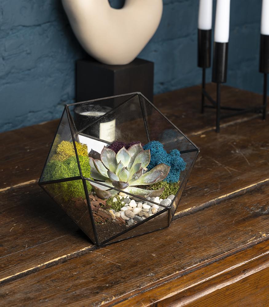 Купить маленький флорариум икосаэдр с суккулентом недорого