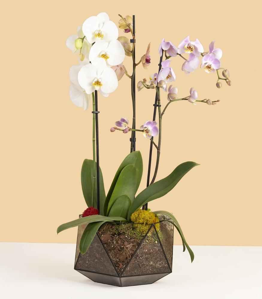 Большие орхидеи в кашпо купить с доставкой