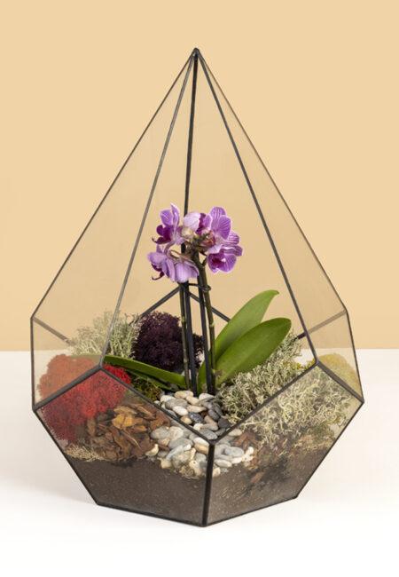 флорариум капля орхидея