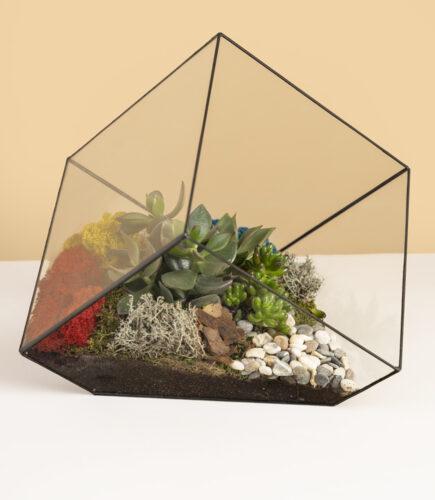 флорариум куб суккуленты
