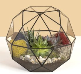 флорариум шар с суккулентами
