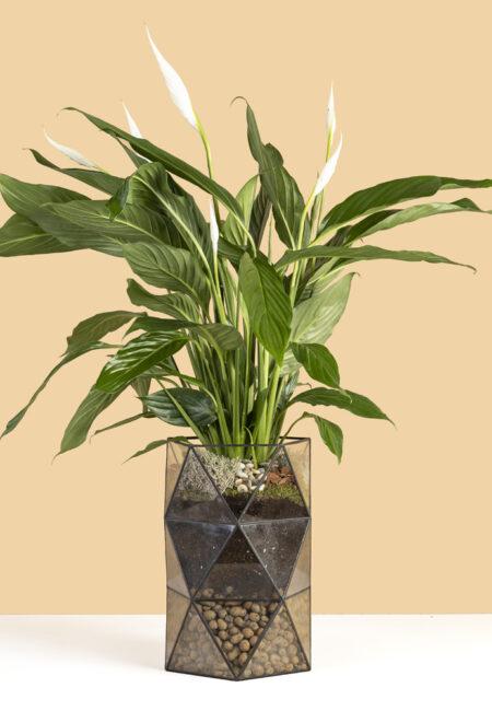 кашпо с растением спатифилум копия