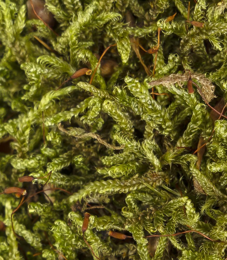 купить лесной мох