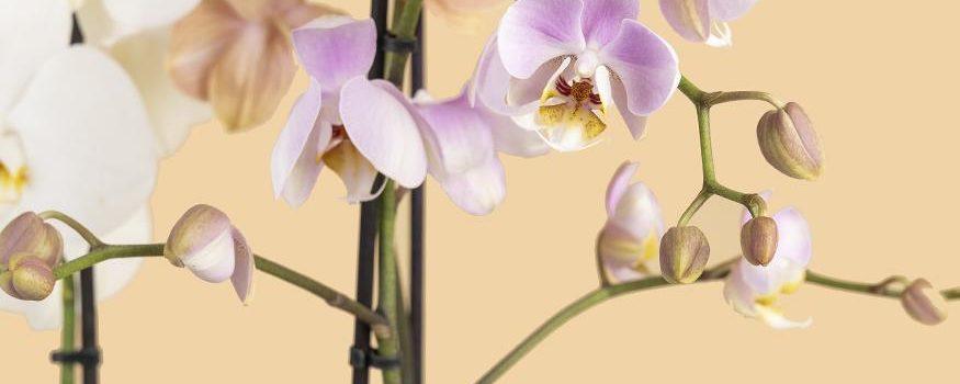 Купить флорариум с с орхидеями