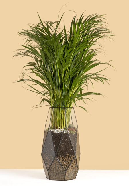 пальма в флорариуме