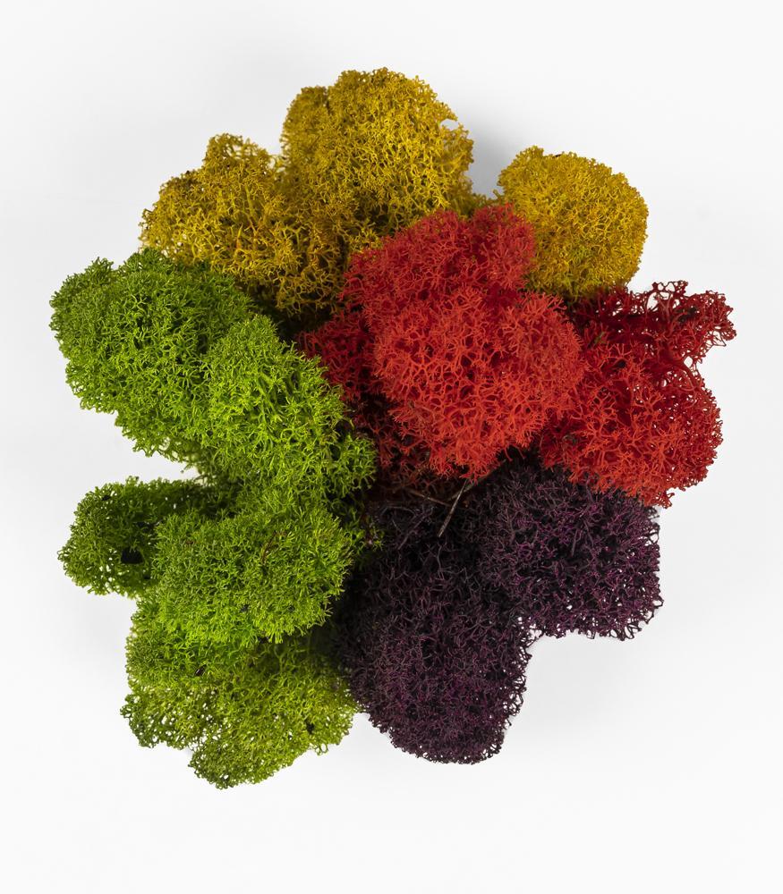 цветной мох стабилизированный купить