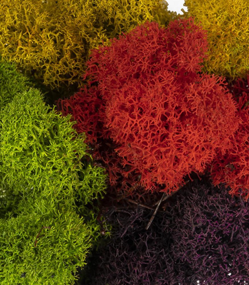 купить цветной мох