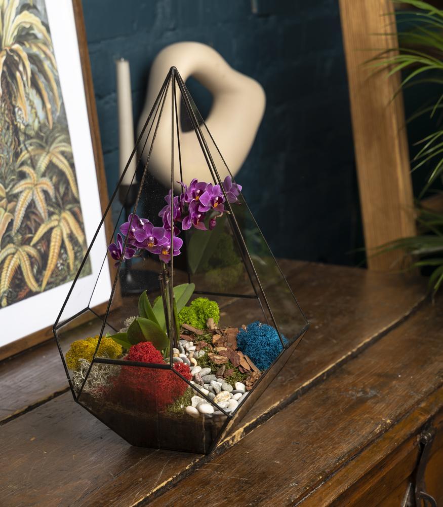 Орхидея в флорариуме купить