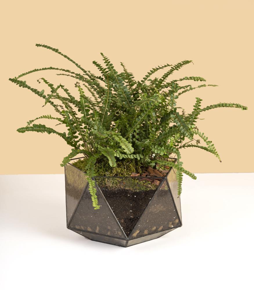 флорариум кашпо с папоротником