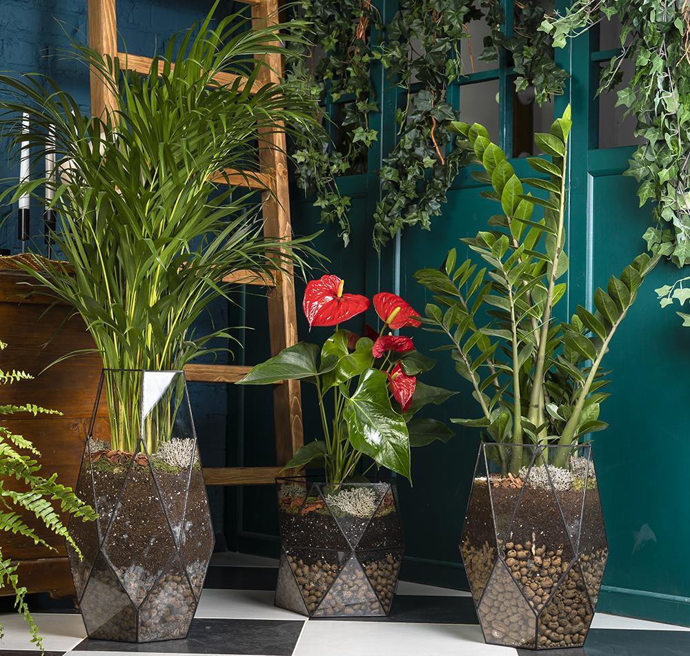 цветы для офиса купить