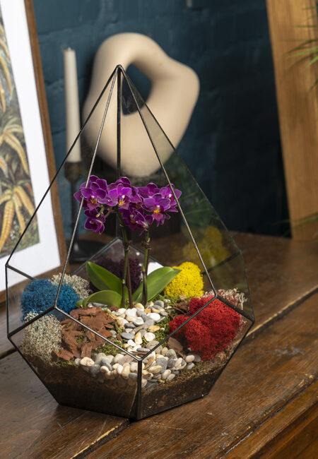 Флорариум с орхидеей купить