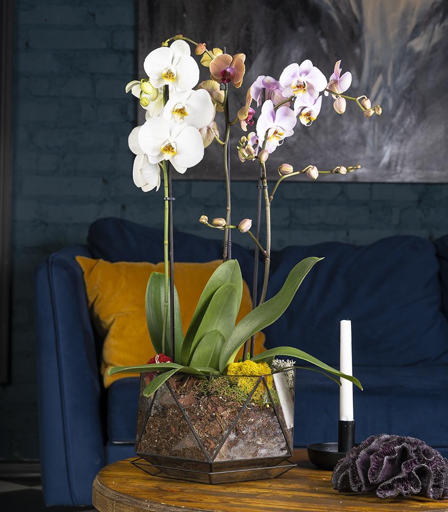Купить орхидеи в кашпо недорого