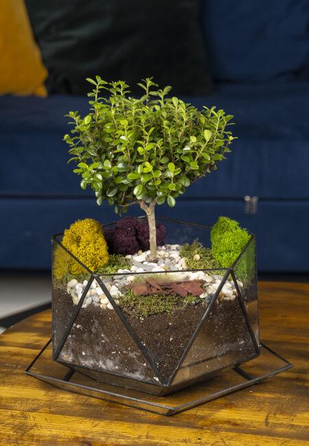 Купить дерево Мирт в флорариуме недорого