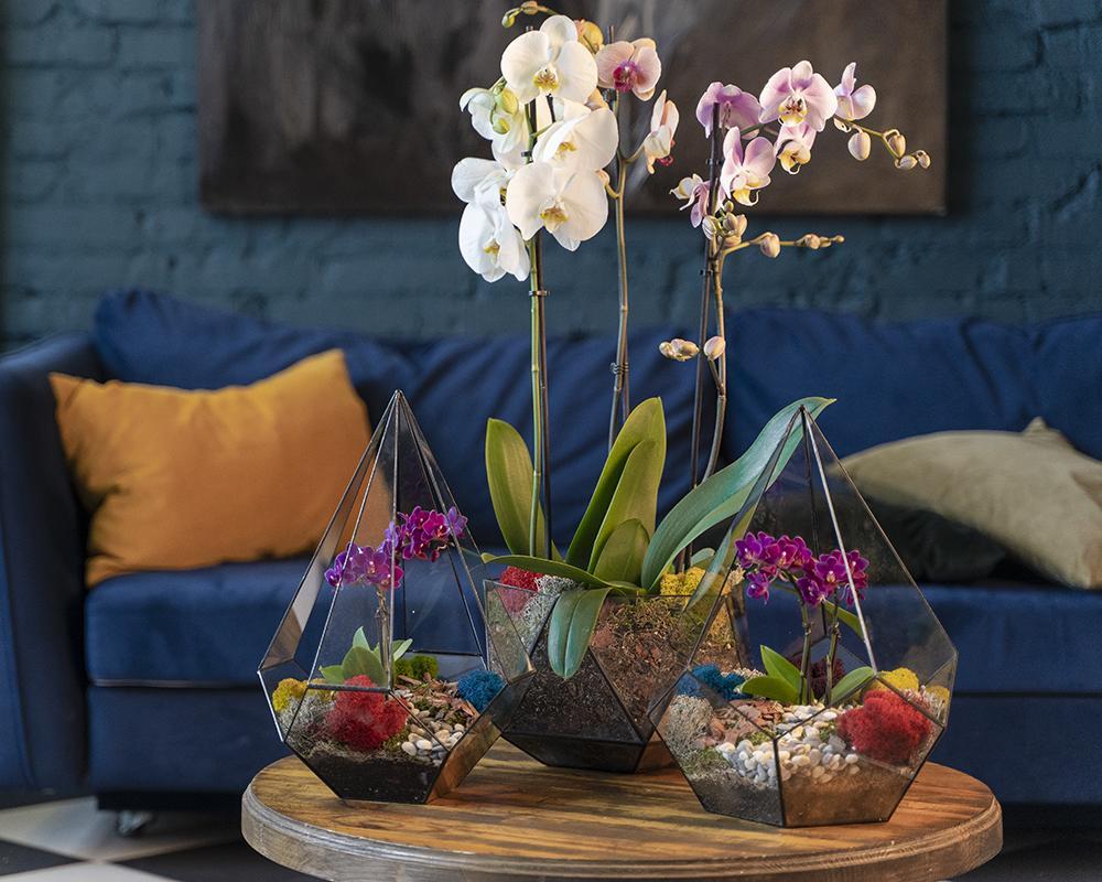 купить орхидею в кашпо недорого