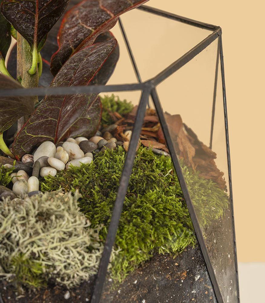 Цветок кодиеум экселент купить в кашпо